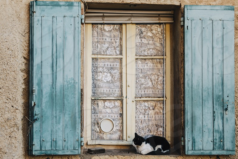 window shutters cat sill windowsill venice france photo