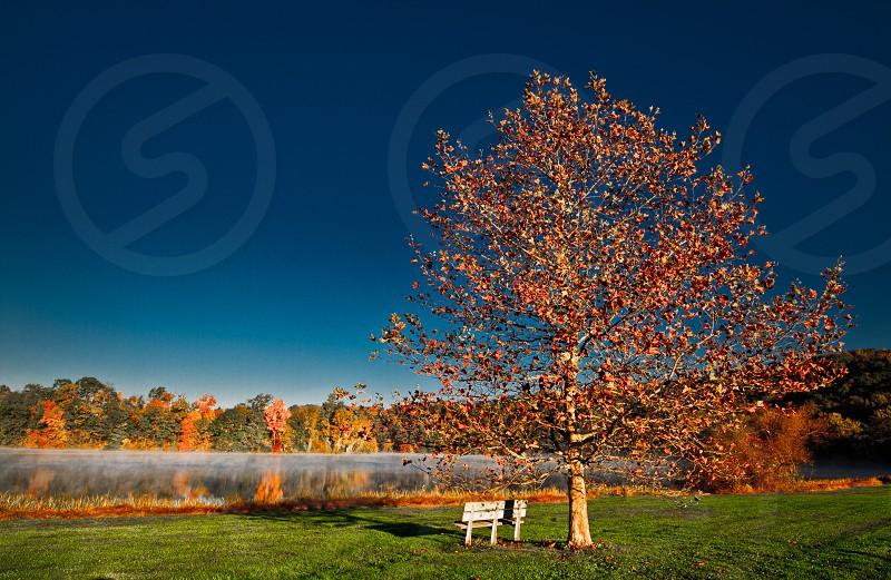 Autumn Bench photo