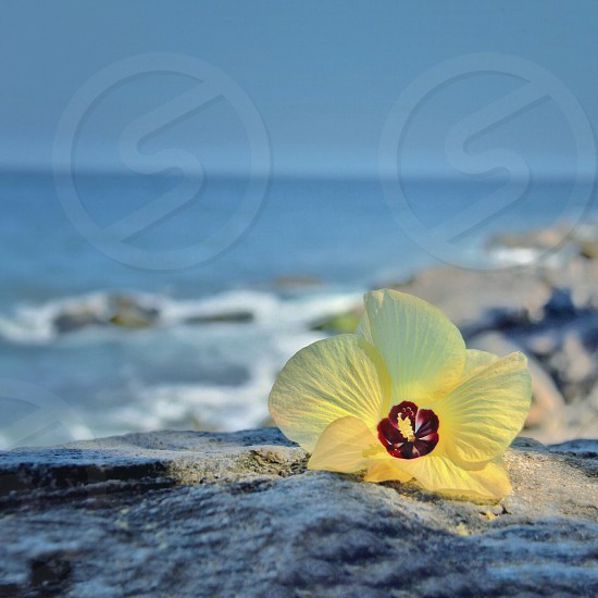 yellow flower petals photo