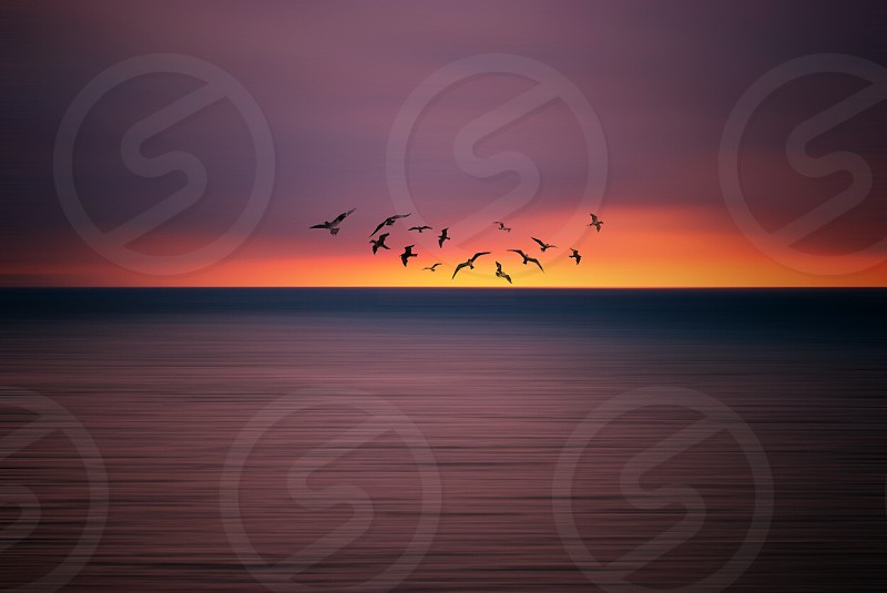 flocks of bird above of the water during sunset photo