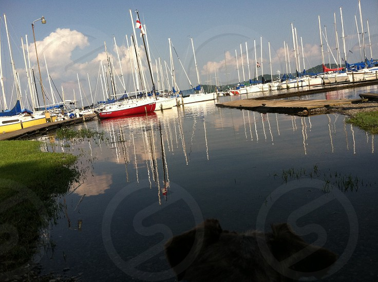 white and red sailing boat photo