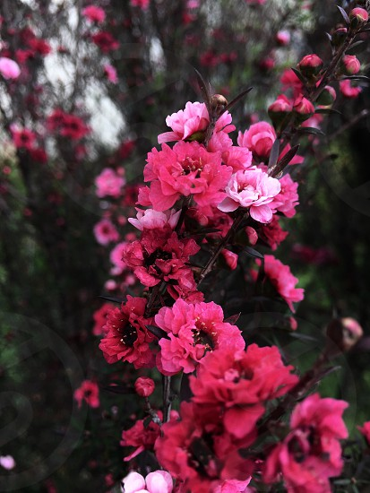 Roses technicolor photo