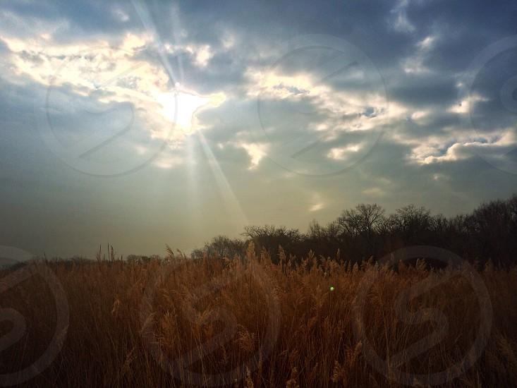 wheat fields view  photo
