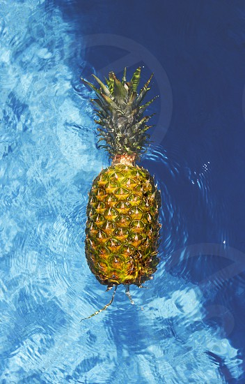 fresh beautiful pineapple  floating in a swimming pool  photo