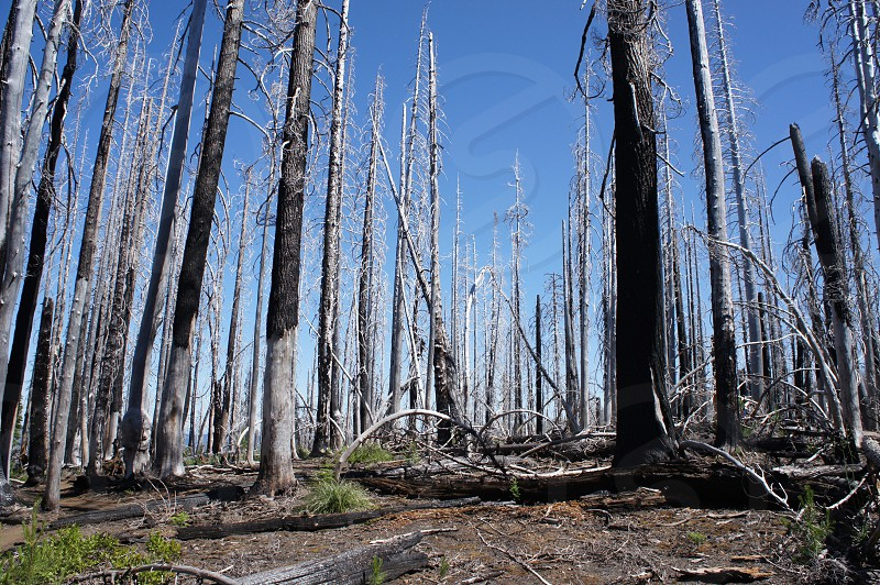 Burnt Forest photo