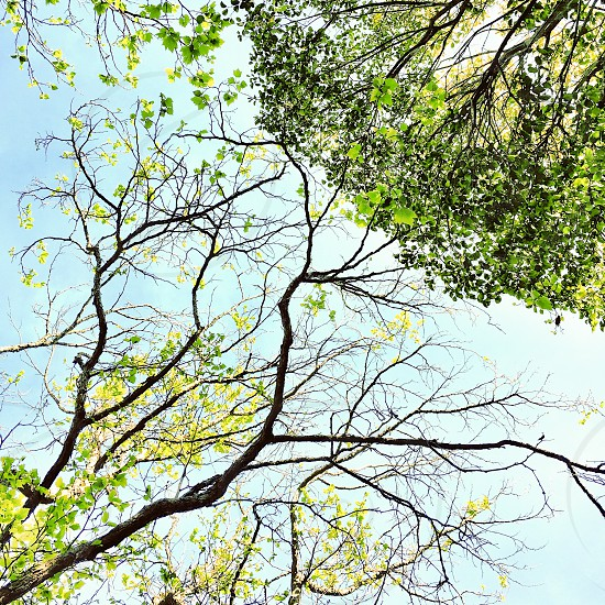 Tree branchessky photo