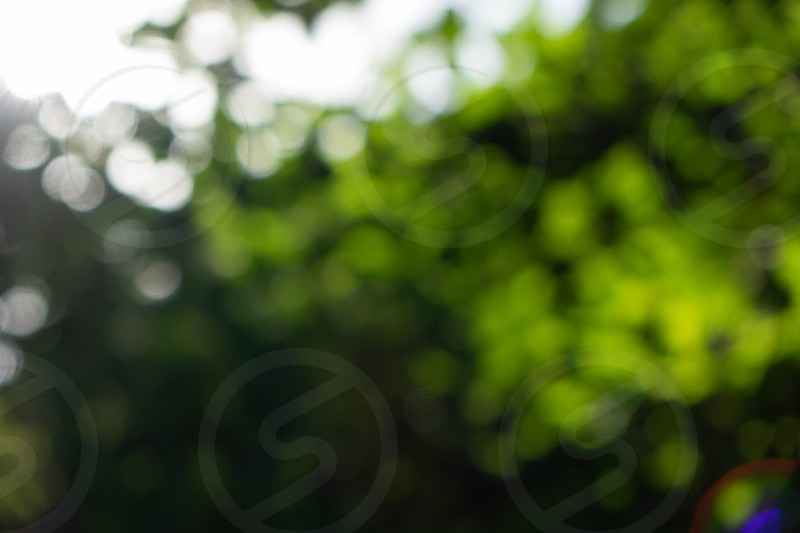 Creative natural green blurred bokeh background. Spring concept photo