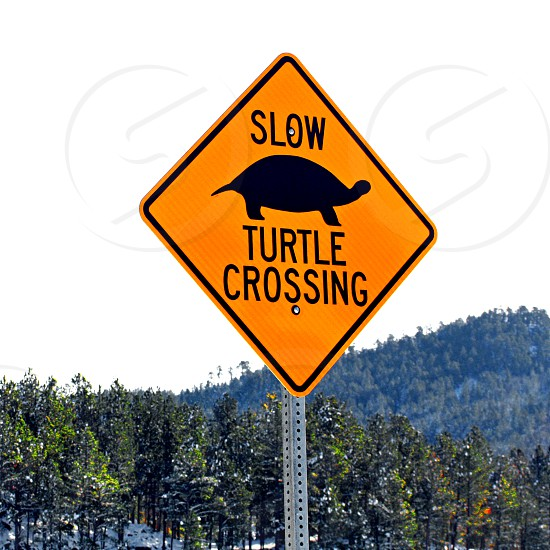 """Sign says """"Slow Turtle Crossing"""" near the pond where they lay breed in the spring. photo"""