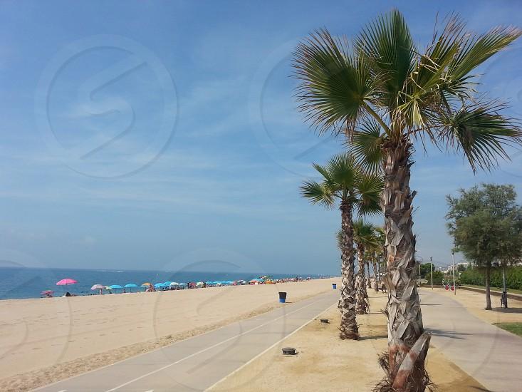 A row of palm-trees near the beach in Spain photo