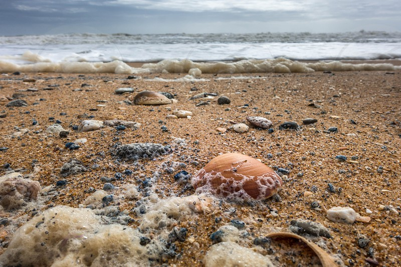 Shells on the Beach at Quarteira in Portugal photo