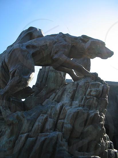 Wolf statue at Busch Gardens  photo
