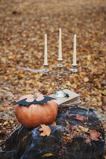 forest night holiday decorations snacks fall orange black mystery Halloween dark glowing candy flashlight ginger fun cute fog gloomy burning candle flame Jack face smile autumn symbol skeleton dark above scary good funny background lonely sadness darkness magic event bat Ghost concept trick emblem Phantom pumpkin face pumpkin October September werewolf mage terrible grim supernatural treat trick or treat horrible wizard Jack-lantern photo