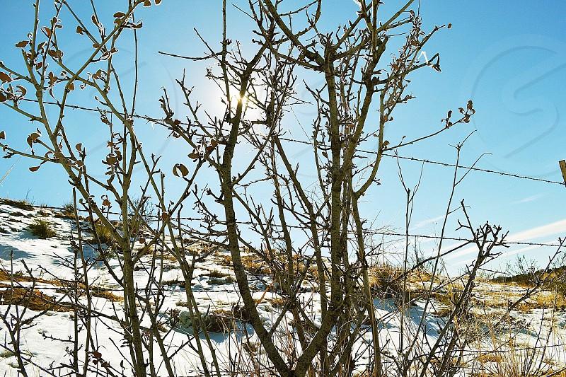 snowy area photo