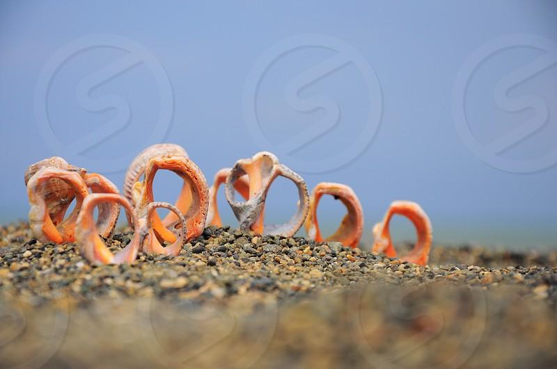 orange round shaped plants photo