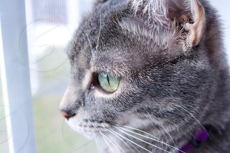 Cat bird watching photo