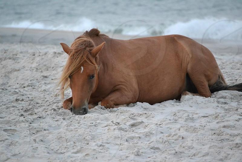 brown horse on white sea sand photo