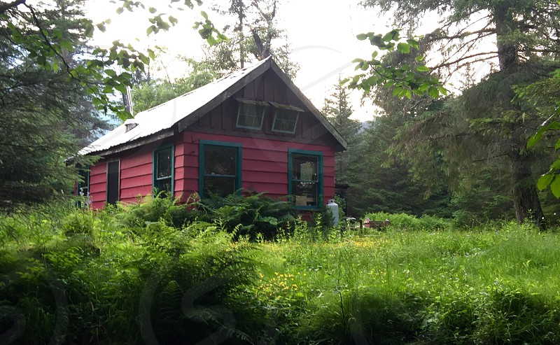 Cabin in the woods green summer grass photo