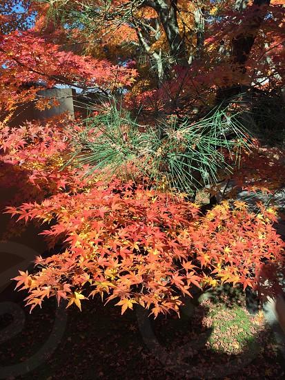 京都 光悦寺 photo