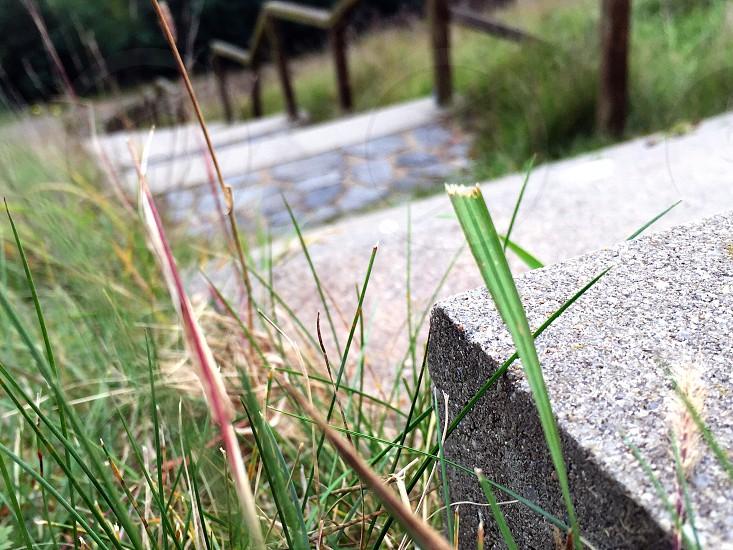 green grass near gray conrete stairs photo