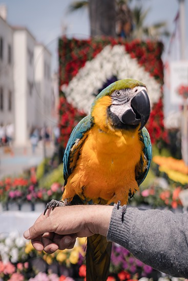 colorful parrot on the human arm outdoor photo