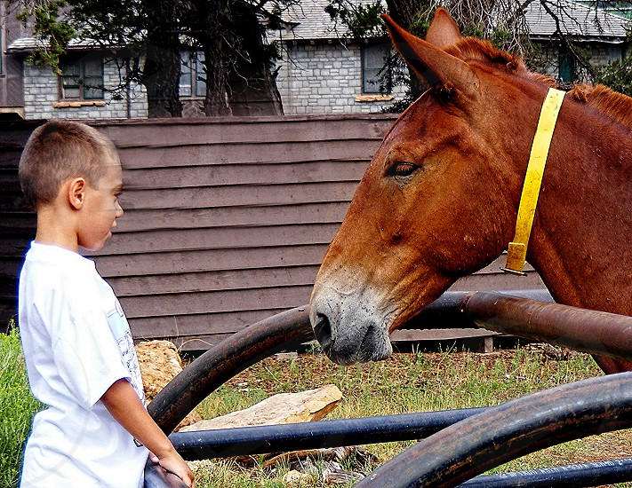 boy and mule communicate with each other photo