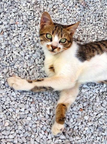 Cute kitten cat feline photo