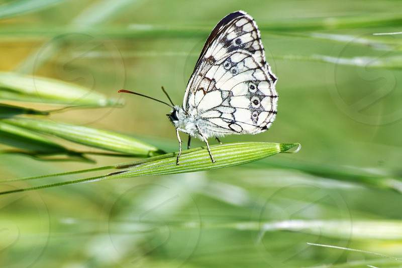 Nature butterfly green photo