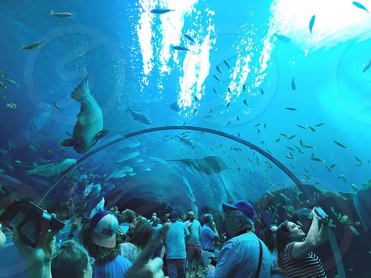 Georgia aquarium tunnel underwater  photo