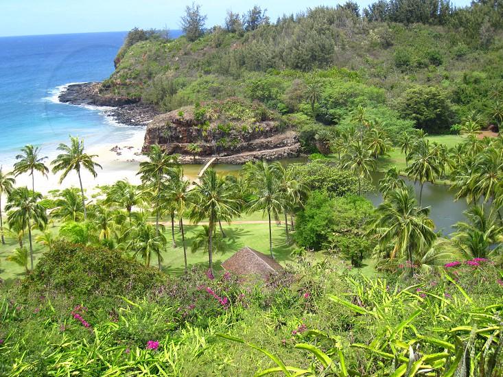 Botanical Garden on Kauai photo
