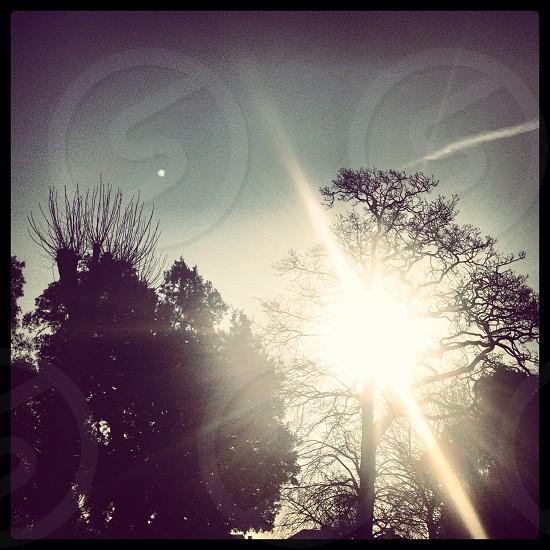 Sun star photo