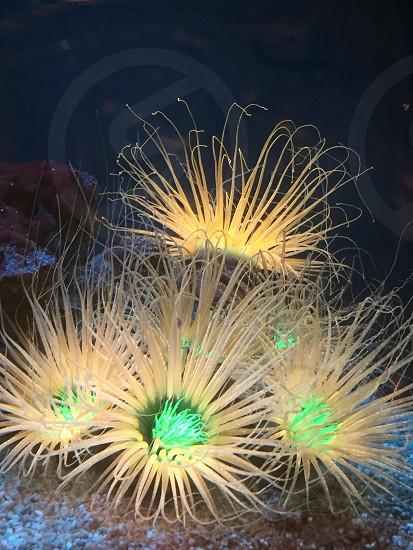 Aquarium underwater creatures glowing sealife  photo