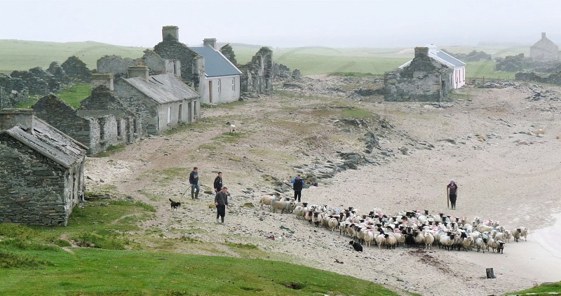 Herding sheep in an abandoned village photo