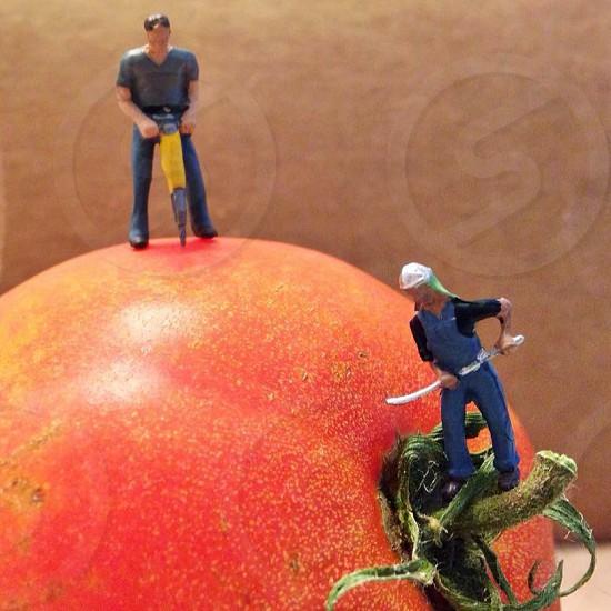 Tomatoes work labormini tiny people farming  photo