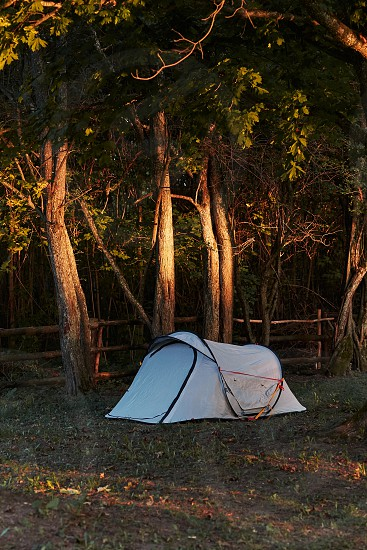Tent among the trees on camping in forest at sunrise. Candid people real moments authentic situations photo