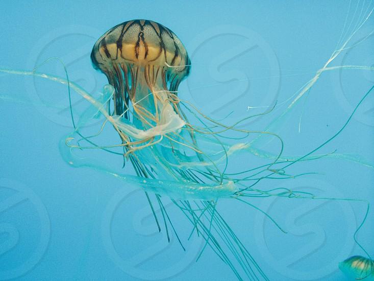 jelly fish aquarium marine Baltimore sea ocean photo