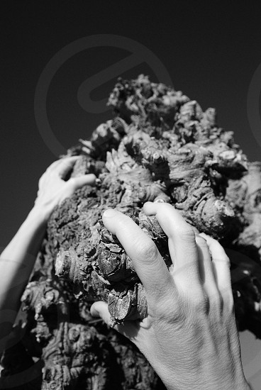 black and white photo of person's hands on organic object  photo
