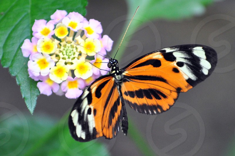 Spring flower nature butterfly outdoors photo
