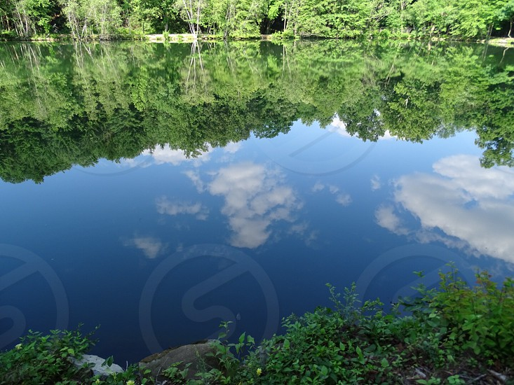 green trees by the water with reflection of white clouds and blue sky during daytime photo