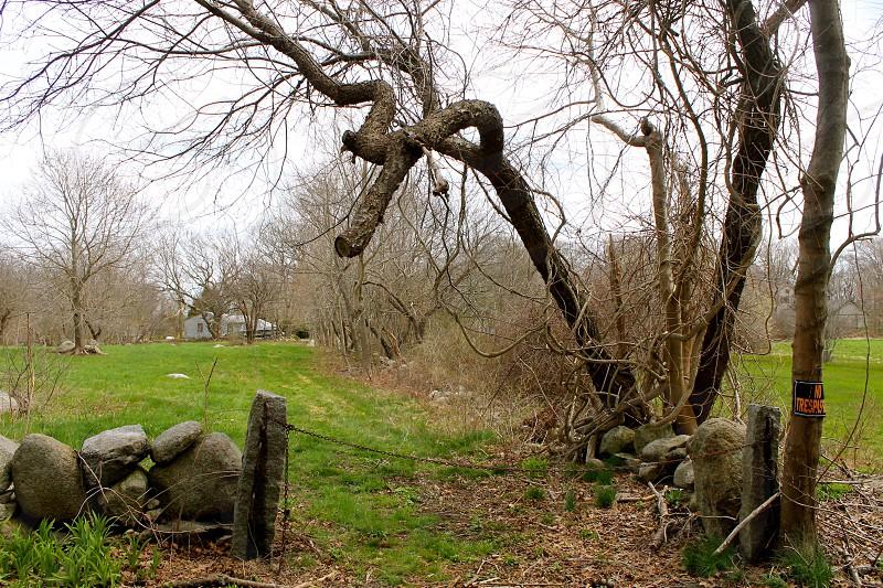 tall leafless trees near big rocks photo