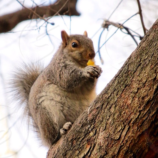 brown and beige squirrel photo