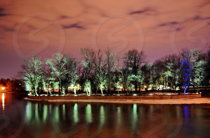 trees lighted photo