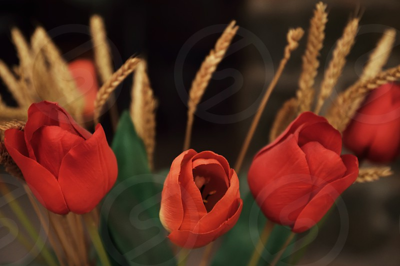 poppies and grain photo