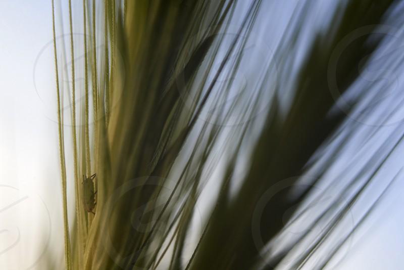 Macro close up of reeds photo