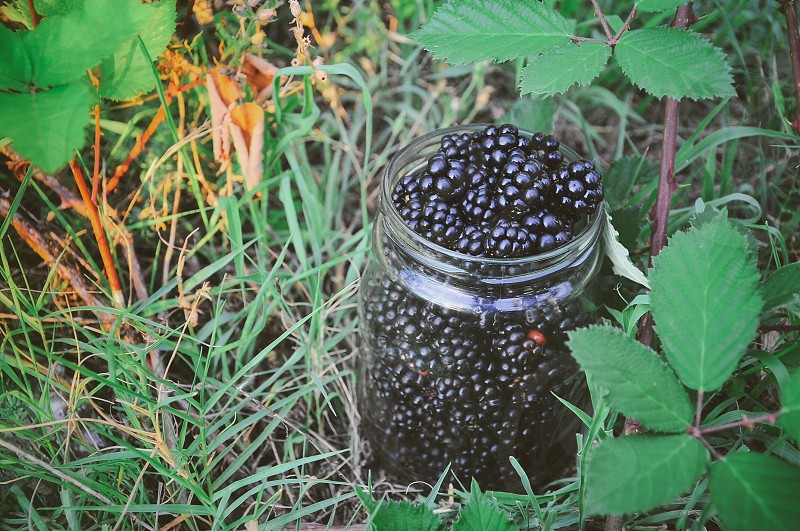 Blackberries  photo
