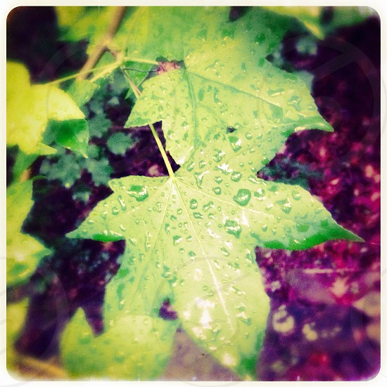 Wet leaves photo
