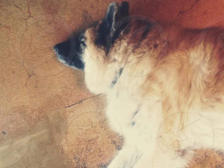 brown short haired medium dog  photo