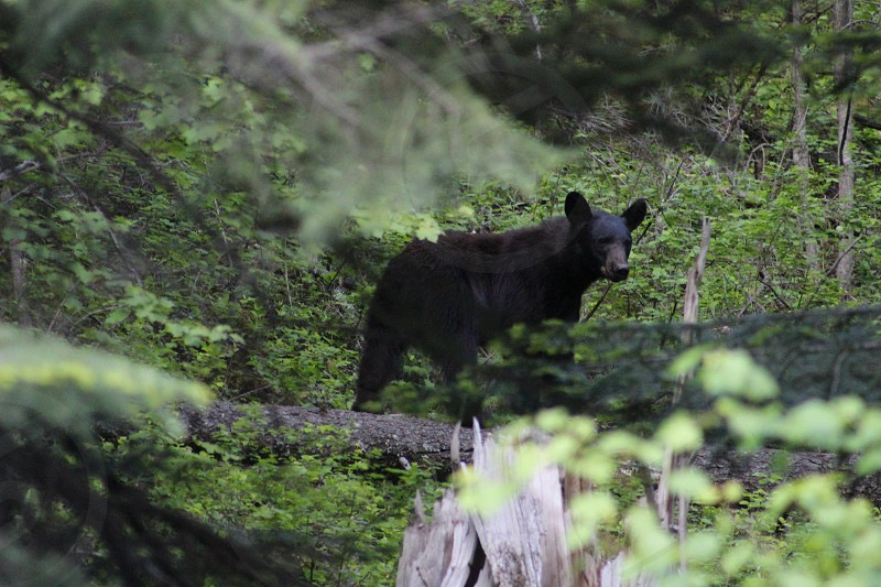black grizzly bear surrounded by green leaf plants at daytime photo
