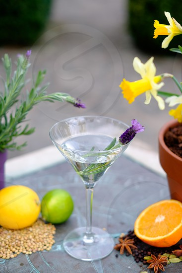 Clear gin botanics with ingredients surrounding the glass lemon orange lime flowers and spices. On a sun dial in a garden. photo