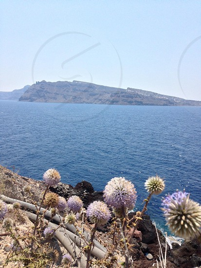 view of white flower and blue sea water photo