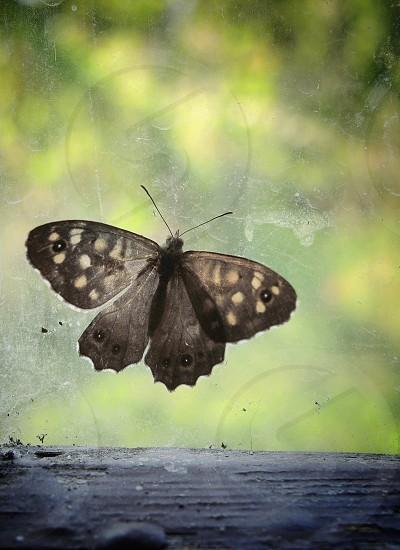 brown moth on window photo